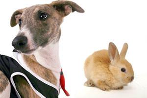 Randki dotyczące praw zwierząt